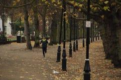 跑步的公园 免版税库存照片
