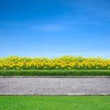 跑步的轨道和黄色花 免版税库存图片