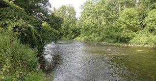 跑沿森林的一条小小河和小河 免版税库存图片