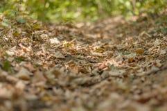 跑的和走的车道的绿色森林油土道路 免版税库存照片
