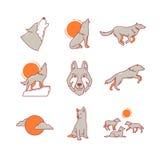 跑的狼拖拉,跳跃和,崽,组装 免版税库存图片