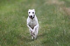 跑的贝蒂娜 免版税库存照片