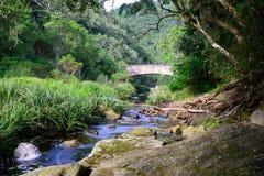 跑通过土产森林-南非的小河 免版税库存照片