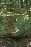 跑通过太阳的干燥小湾河床起斑纹了森林和在砂岩步 免版税图库摄影