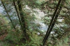 跑通过密集的森林, Capilano河公园的河, BC,能 库存图片