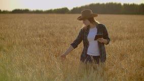 跑通过有机麦田,steadicam的妇女的手特写镜头射击了 t 接触麦子的女孩的手 股票录像