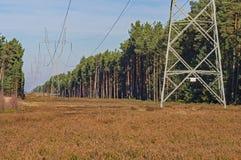 跑通过杉木森林的一条高压输电线 库存图片
