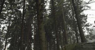 跑通过森林森林的运动员女孩 到达,停止在岩石 真正的人妇女赛跑者体育训练在秋天 图库摄影