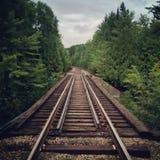 跑通过森林的铁轨 免版税库存图片
