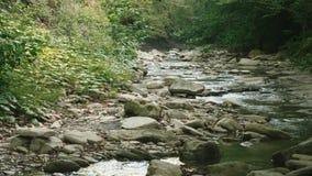 跑通过石头的小河水在有丛林的两家银行之间在他们 股票视频