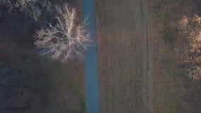 跑通过秋天森林的妇女的鸟瞰图在日落 影视素材