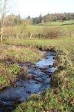 跑通过草甸的小河 库存照片