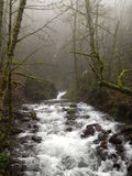 跑通过薄雾的河在波特兰,俄勒冈 免版税图库摄影