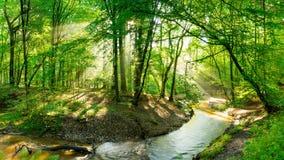 跑通过被日光照射了森林的溪 免版税图库摄影