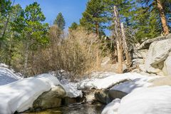 跑通过足迹的森林的小河到圣哈辛托山峰,圣哈辛托国家公园,加利福尼亚 免版税库存图片