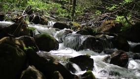 跑通过青苔被盖的岩石的森林河 影视素材