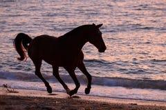 跑通过水的马 免版税库存照片