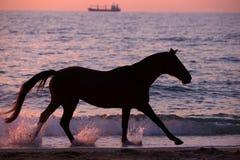 跑通过水的马 库存图片