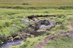 跑通过skye小岛的一个岩石草甸的小河  免版税库存照片