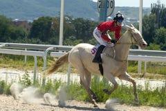 跑马在Pyatigorsk 免版税库存图片