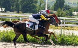跑马在Pyatigorsk 图库摄影