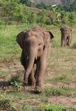 跑婴孩的大象  免版税库存照片