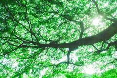 距离横向星期日日落结构树 库存照片