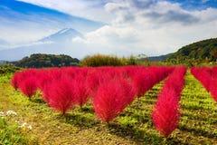 跟斗杂草和Mt 富士 图库摄影