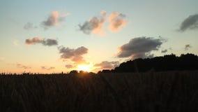 跟踪入一块麦田的移动式摄影车射击,与金黄日落和剧烈的天空在东部弗里西亚,北部德国 影视素材