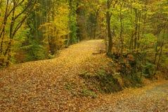 跟踪在秋天森林里 图库摄影