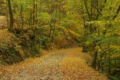 跟踪在秋天森林里 库存照片