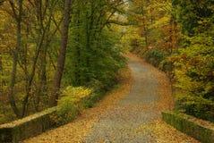 跟踪在秋天森林里 免版税库存照片