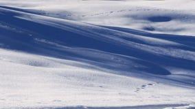 跟踪在雪的射击 免版税图库摄影