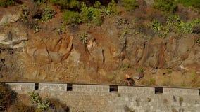 跟踪爬上山路的一个男性骑自行车者的录影射击 供以人员做在一条多小山高速公路路的循环的训练  股票视频