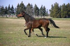 跟随她的牧场的小的马驹母亲 免版税图库摄影
