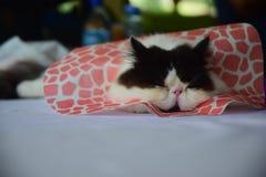 跟随数百猫乐趣猫展示 库存图片