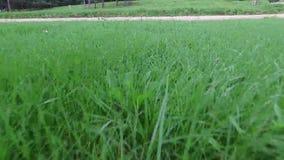 跟随步行绿草脚视图 影视素材