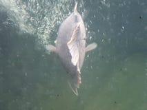 跟随那条鱼 库存图片