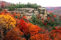 跨接秋天自然公园 库存图片