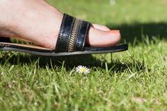 跨步在一朵小的花的女性英尺 免版税图库摄影