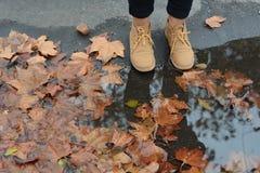 跨步在叶子的布朗起动 免版税图库摄影