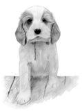 跨步在砖墙上的逗人喜爱的小狗。 免版税库存图片