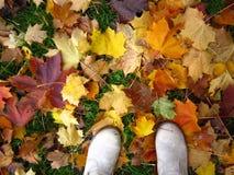 跨步在落的槭树道路  免版税库存照片