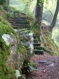 跨步森林地 免版税图库摄影