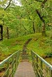 跨步森林 免版税库存图片