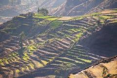 跨步的大阳台与早晨在科尔卡峡谷,秘鲁使模糊 免版税库存图片