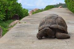 路乌龟 免版税图库摄影