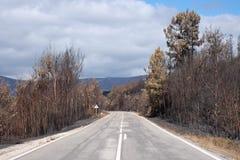 路低谷被烧的森林 库存照片