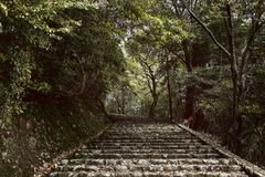 路到森林里在Arashiyama,日本 库存照片