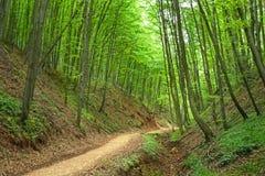 路到自然里 免版税库存图片